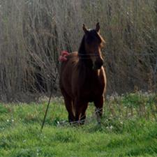 Casa rural horse riding