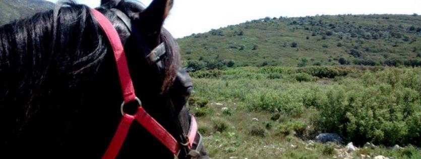Paseo a caballo por sant mateu